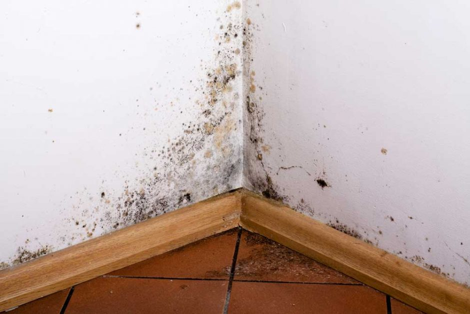 Mould growing in a tenants house, new information for landlords - homes act 2018 (Fitness for Habitation)